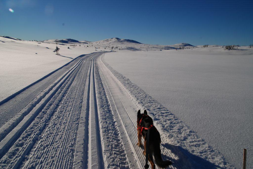 Slike skiforhold kan vi få når mange bidrar. Meld deg inn i Hedalen løypelag hvis du ikke allerede har gjort det. Foto: Helge Nordby