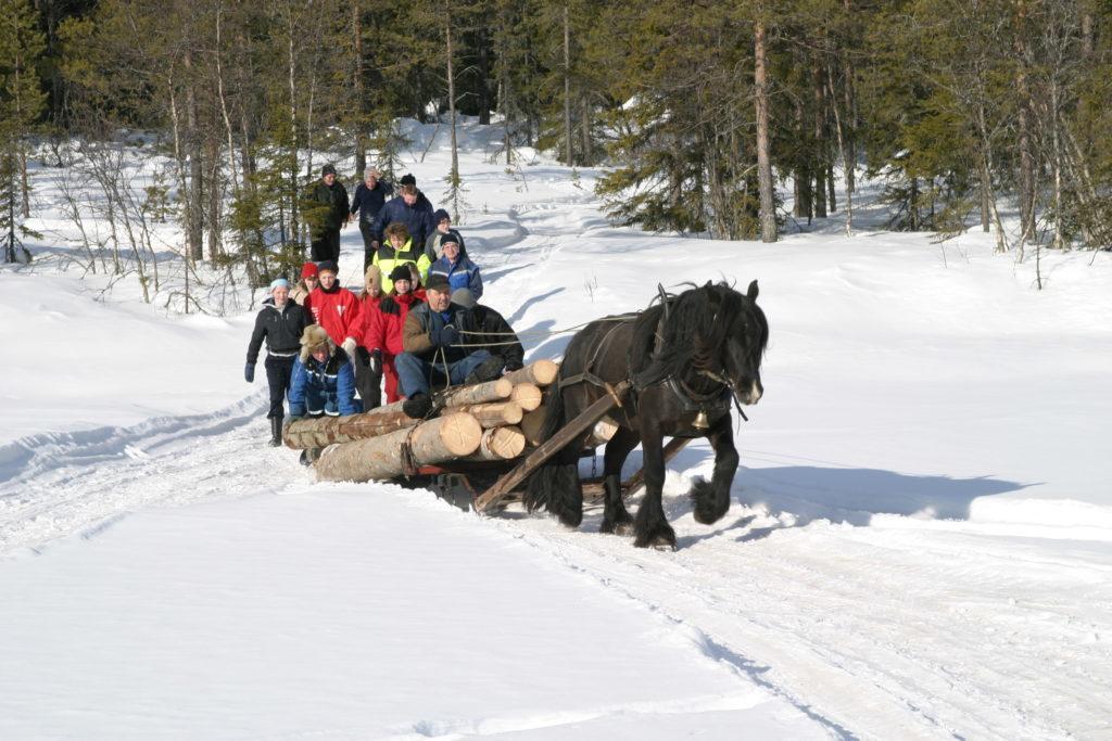 Tømmeret kjøres fram til Øvre Grunntjern