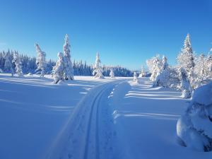 Hedalen idrettslag kjører opp skiløype fra Jevnlismyra