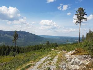 Utsikt mot nord fra skogsbilvegen