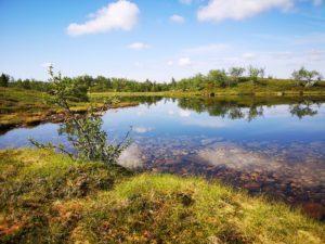 Flere flotte småvann i området