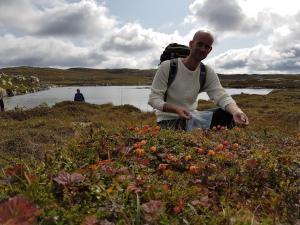Molteplukking i høyfjellet. Foto: Arne Heimestøl