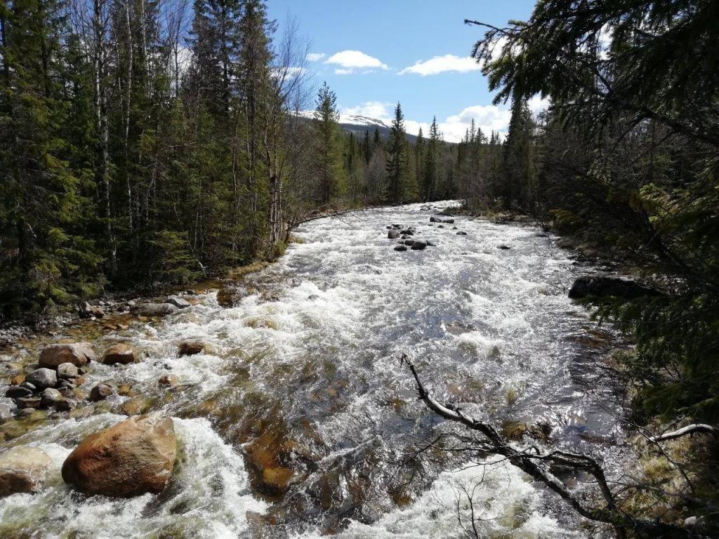 Fjellelva har med mye vatn fra Bogfjella