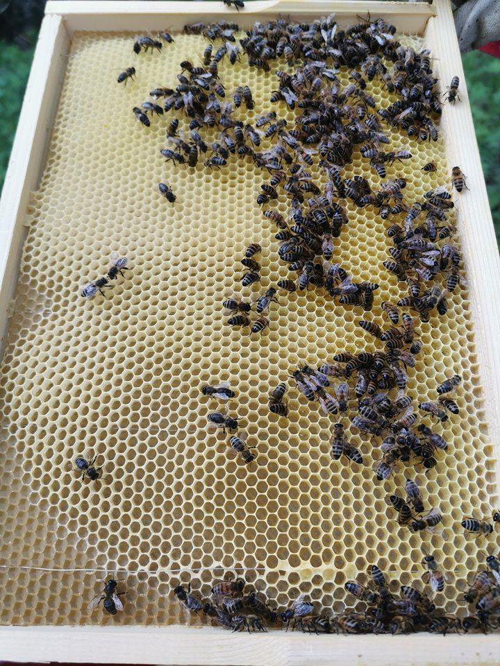 Her kan vi se hvordan biene bygger opp en tavle.