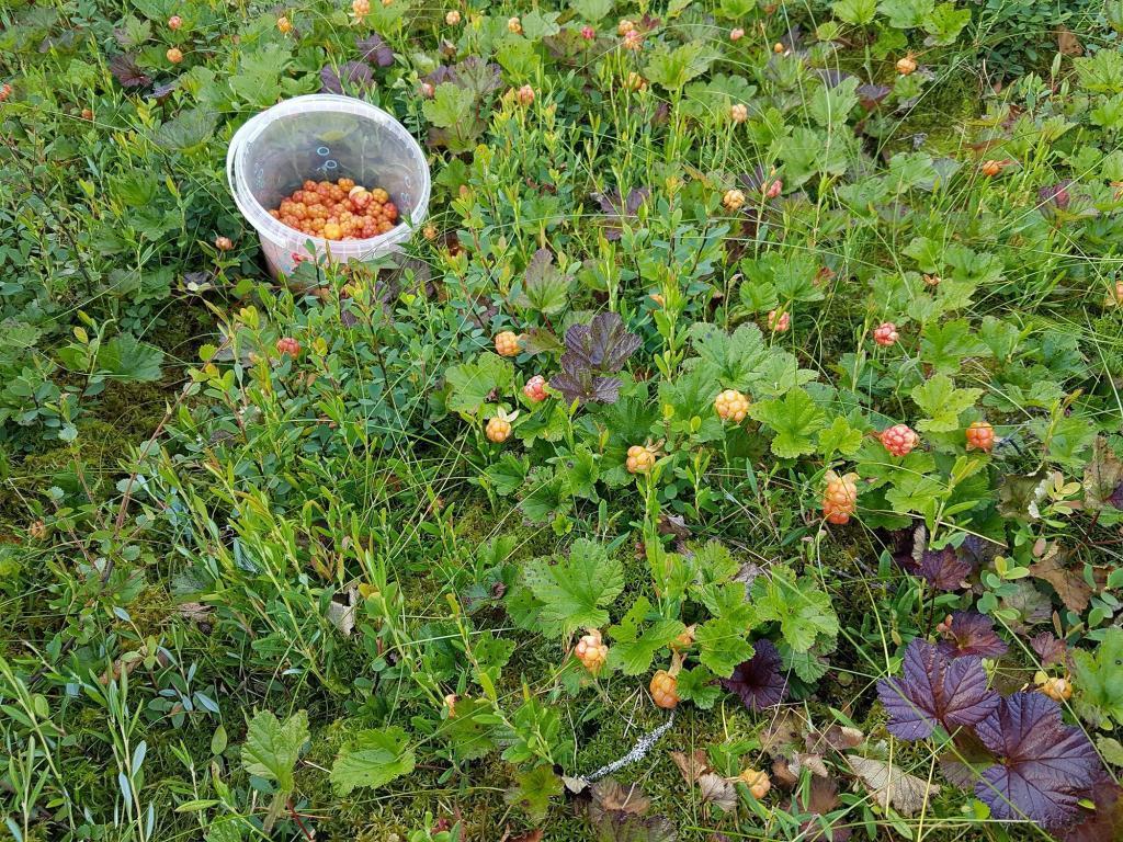 Det finnes fine bær i år også.