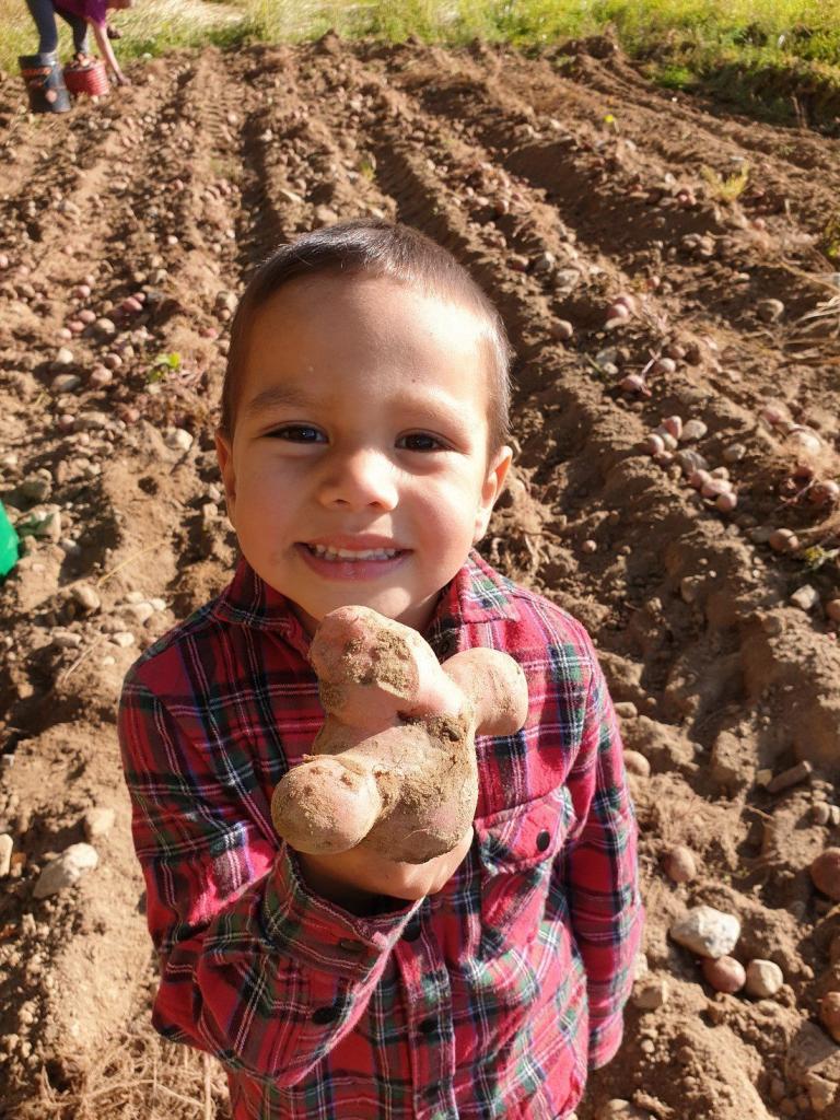 Årets rareste potet – ungene kalte den korona.