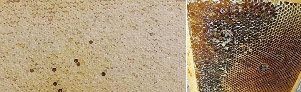 Honningramme før og etter skrelling