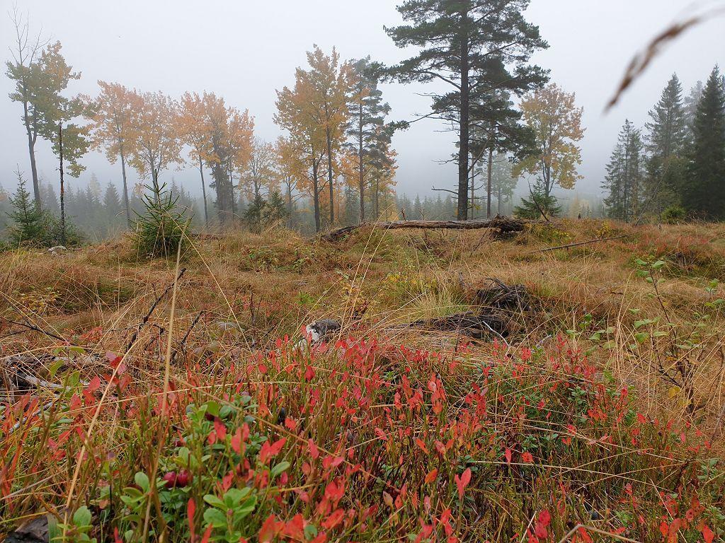 Vakkert høstvær, men tåka skaper utfordringer