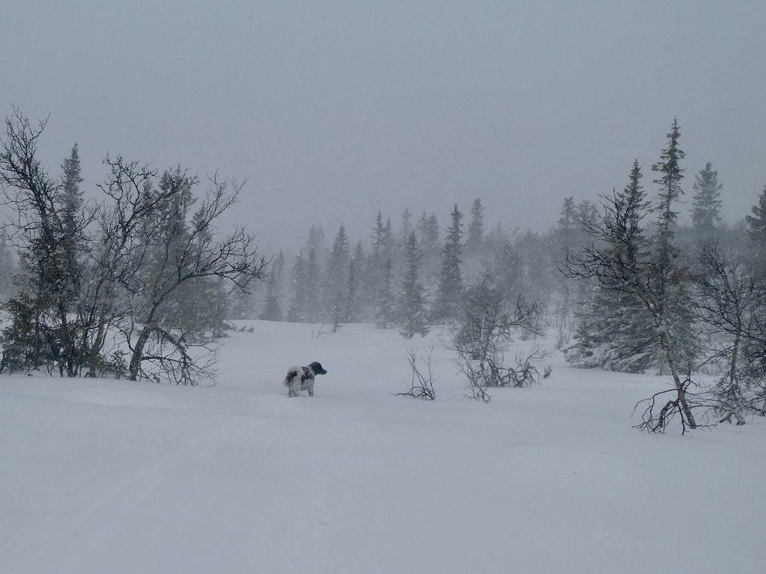Friskt øverst i Søbekkdalen.Foto: Line Wermundsen Mork