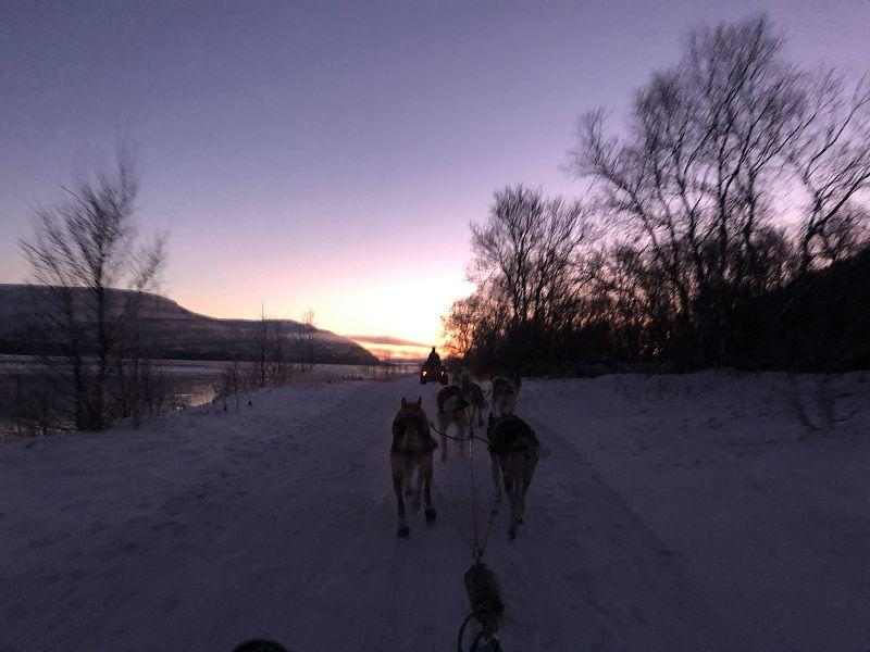 Hundekjøring i solnedgang