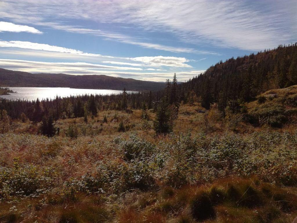 Bærplukkere setter gjerne pris på Hedalen og Hedalsfjella