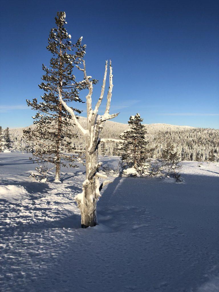 Vinterlandskap i Tubbegarden og Fledda. Foto: Harald Arne Haugen.