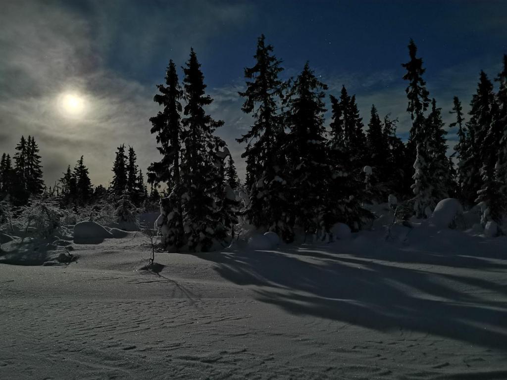Måneskinn. Foto: Grete Skogly