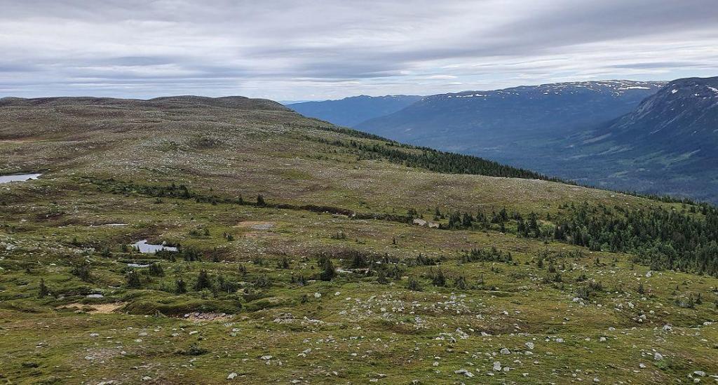 Utsikt mot Hestehøgda - et annet turmål du kan nå fra Tubbegardsvegen